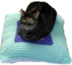 Cat on pillowghan