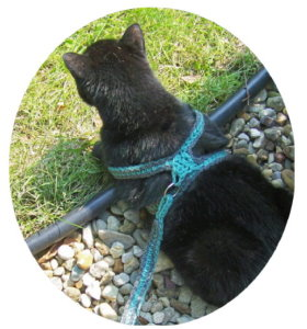 Crochet Cat Leash
